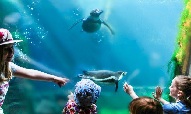 Tierisch aufregende Zeit im Zoo am Meer Bremerhaven – Die Eisbären-Zwillinge, Seehund, Puma, Pinguin & Co. hautnah erleben!