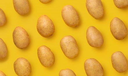 Köstliche Knolle – Der vielseitigste Einwanderer der Welt