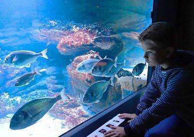 Zoo am Meer (Foto: Manuela Schönau-Jahn)
