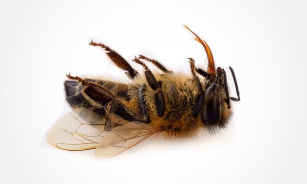 Das Schweigen der Brummer – Insektensterben hat weitreichende Folgen