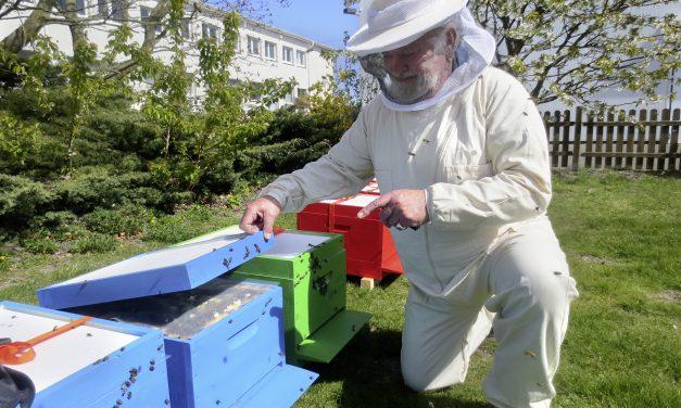 Das Summen der Nachhaltigkeit – Stiftung Hafenbiene