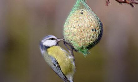 Füttern gegen das Vogelsterben?