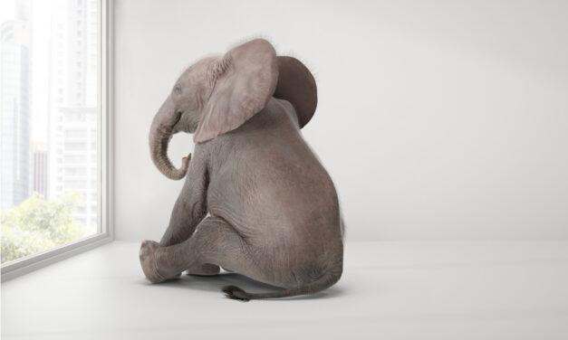 Der Elefant im Raum
