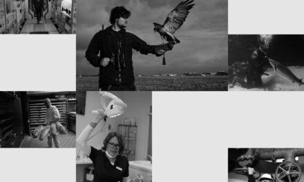 Arbeit sehen – Ilker Maga zeigt Menschen  und ihre Berufe