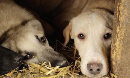 ProDogRomania e.V. – vorbildlicher Tierschutz in Rumänien und Deutschland