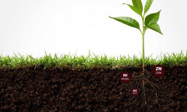 SUPERPFLANZEN – Hyperakkumulatoren reinigen Böden und ernten Rohstoffe