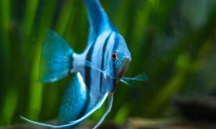 Tierschutz unter Wasser – Fische sind clever, sozial und empfindsam