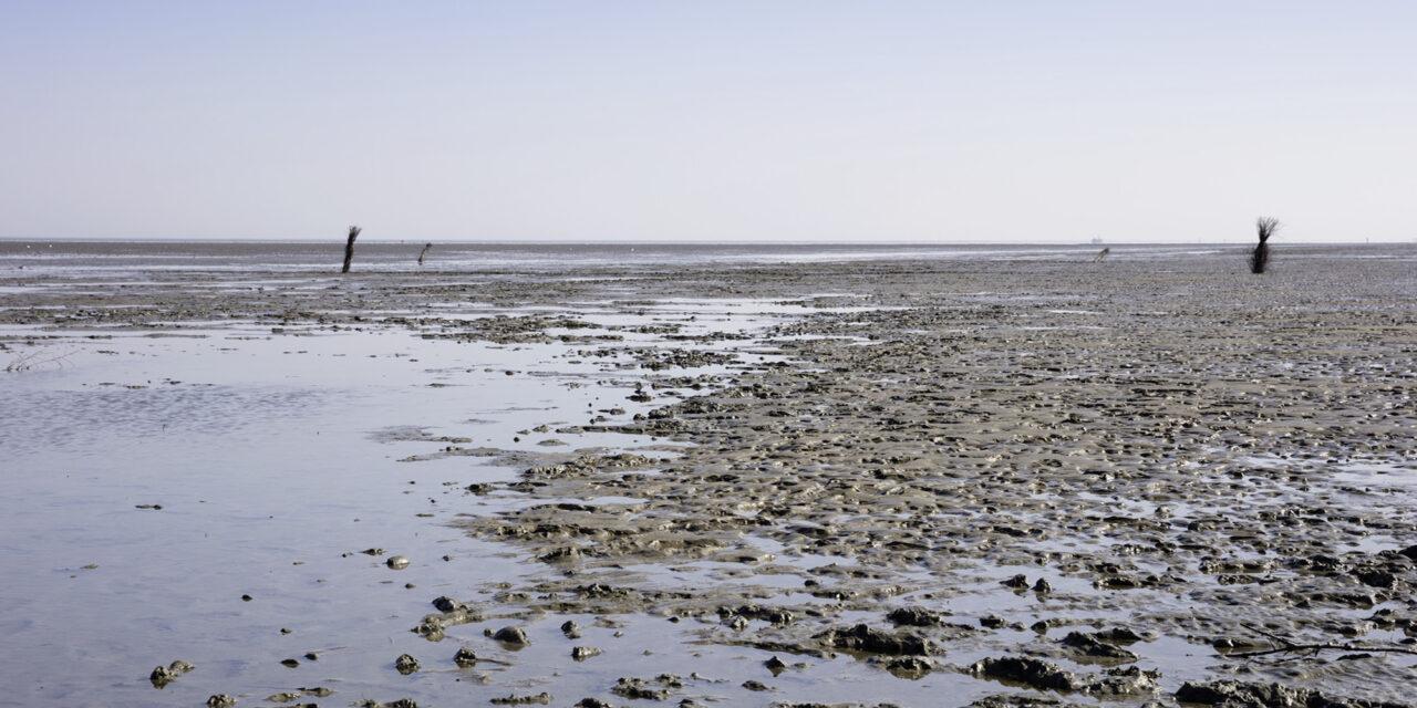 Das Wattenmeer stirbt – Hanseatische Habgier zerstört UNESCO-Welterbe
